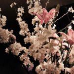 4/4 桜満開