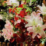 12/7 今週の花